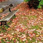 Autumn bench in Preston