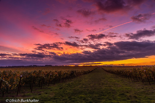 Sunset light over the McLeay vineyards.