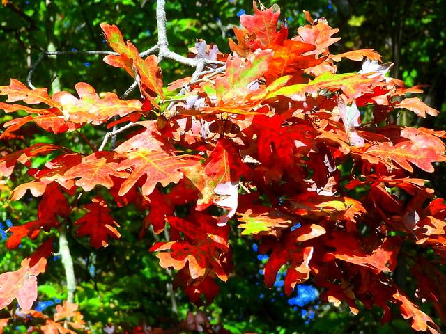 Autumn Timid Steps