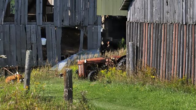 Decomposing tractor and barns, Halton Hills, Ontario