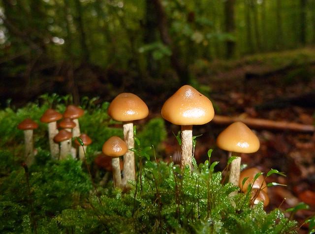 Pilze im Buchenwald