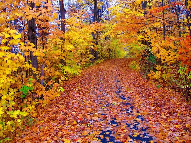 Leaves fallen...