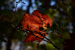 Fall #2