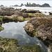 Oregon - 16 (Ocean Coast)