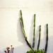 Cactus climbing