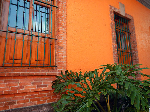 Orange walls backdrop a large philodendron in Coyacan, Mexico