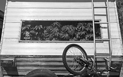 Homeless Camper with a healthy crop of marijuana plants in Vancouver, Canada