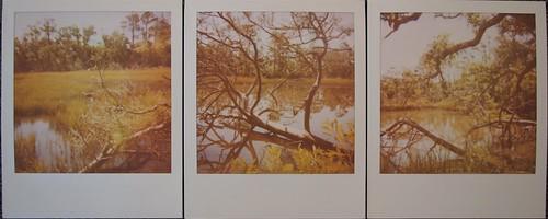 Pola Week, Tues., 10-19-20, Triptych