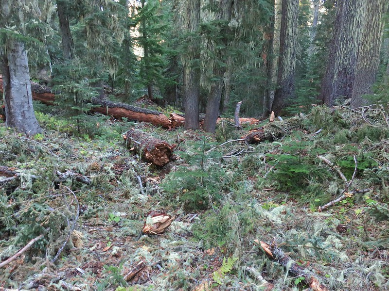 Acker Divide Trail covered by blowdown