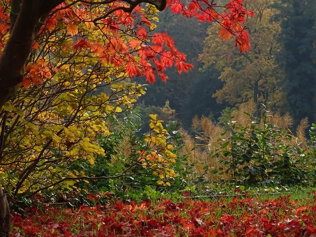 Herbstleuchten 💕