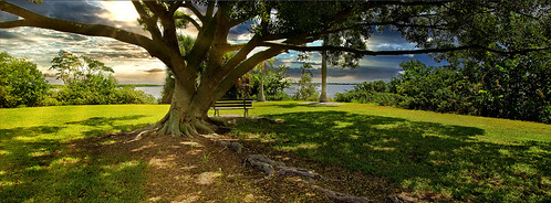 park bench tree wide shade water matlacha day landscape pretty solitude grass gree quiet gulf mexico fishermen parkland sitting lunchtime relaxation