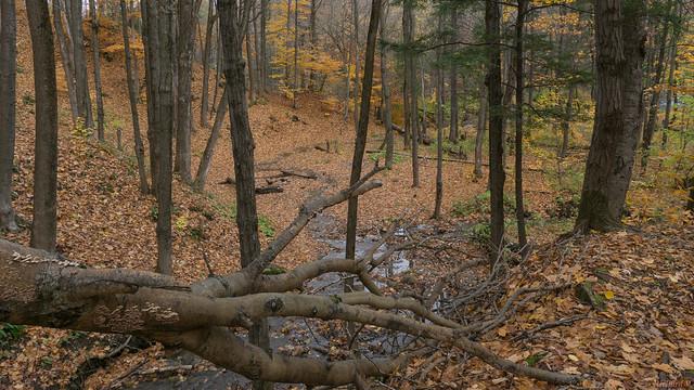 Automne, autumn, Parc de l'Escarpement, Québec, Canada - 5724