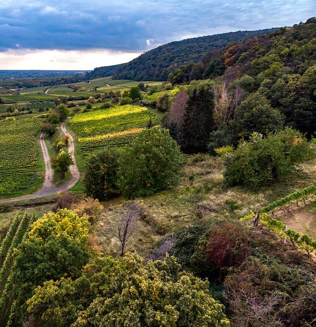 Die Pfalz in der Nähe von Deidesheim