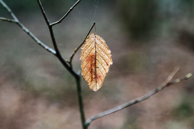 La dernière feuille // The last leaf