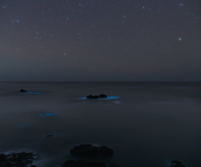 Bioluminescence and a Tiny Meteor