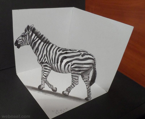 3D Drawing Zebra