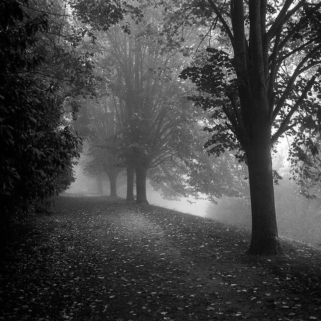 Misty way...