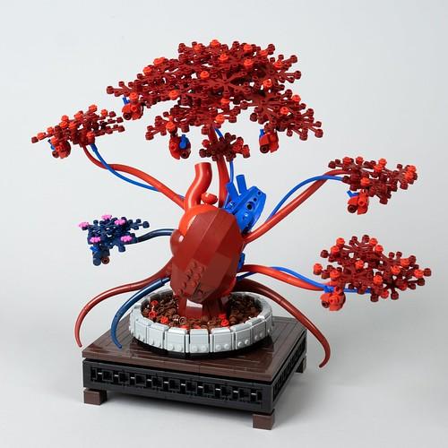 Aortis Bloom