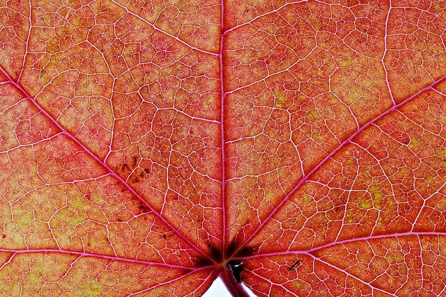 Autumn leave  [explored 20.10.2020]