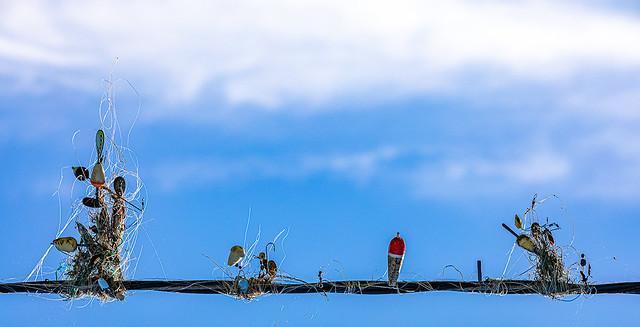 Fishermen's Dilemma