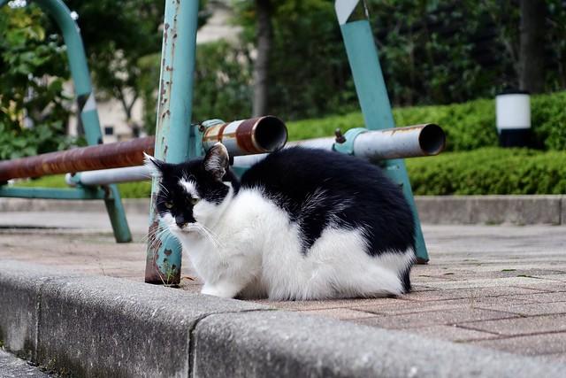Today's Cat@2020ー10ー20