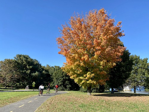fall color on the Mount Vernon Trail