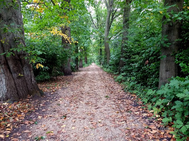 A hint of autumn color......A path is a prior interpretation of the best way to traverse a landscape (Rebecca Solnit) !!