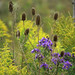 """from my bokeh series """"A Meadow in Fall"""""""