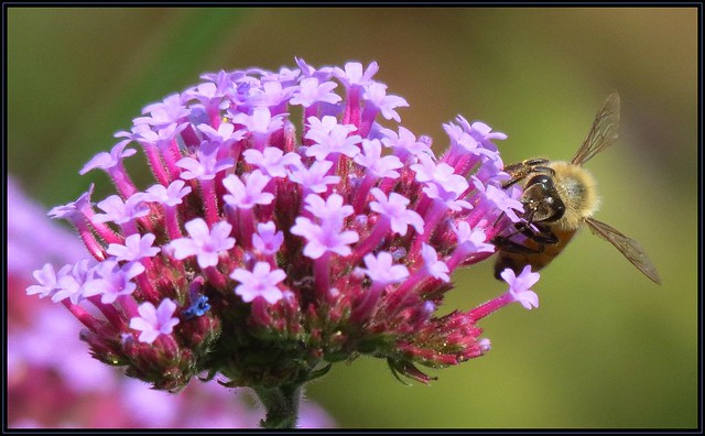 IMG_5867 Meant to Bee 9-24-20