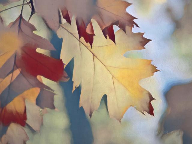 Jeu D'automne