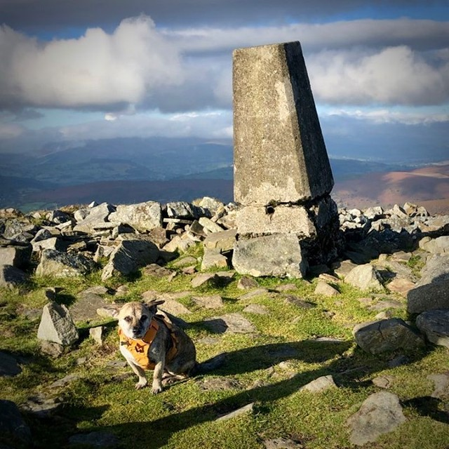 Pen Allt-mawr (719m). The ears say it all. #windy A glorious day out hiking the #LlanbedrHorseshoe in the #BreconBeacons. Full details in my latest trip report over on the b-log. #trigpointdogs #trigpoint #ordnancesurvey #osmaps #wales #visitwales #brecon