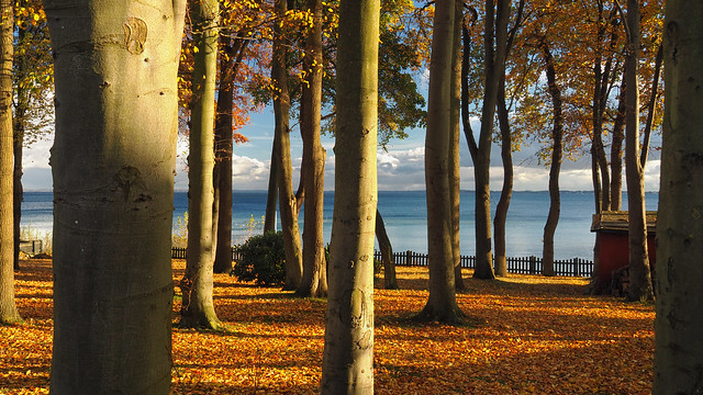 autumnal Baltic Sea view