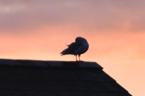 silhouette sunrise bird roof