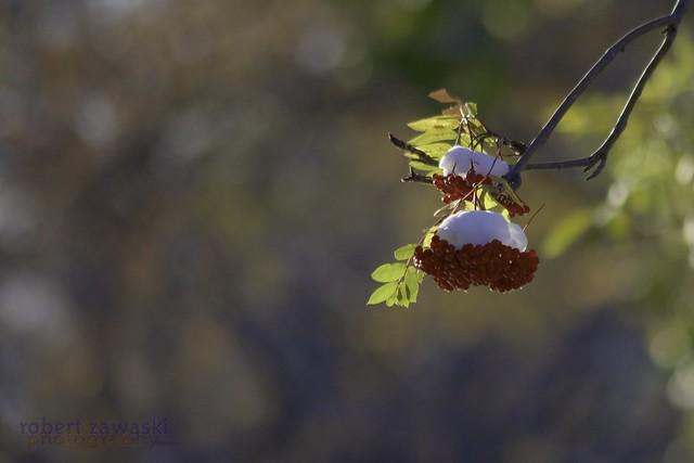 seasons in the air