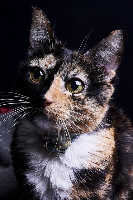 Retrato gatuno - Cat portrait