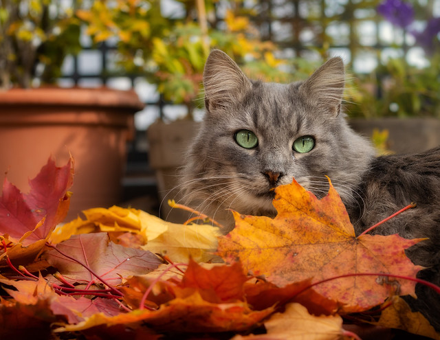 Autumn colours and Fynn