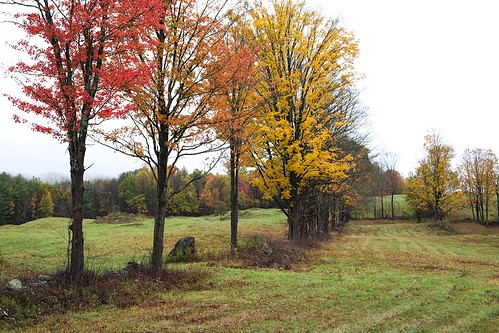 field stonewall maples fallcolors autumn weston vermont newengland fujifilmxe2 fujinonxc1545