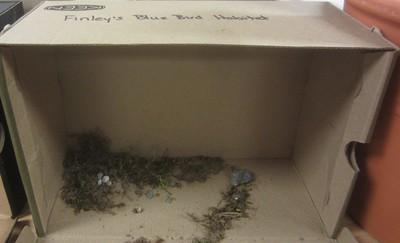 Bluebird habitat