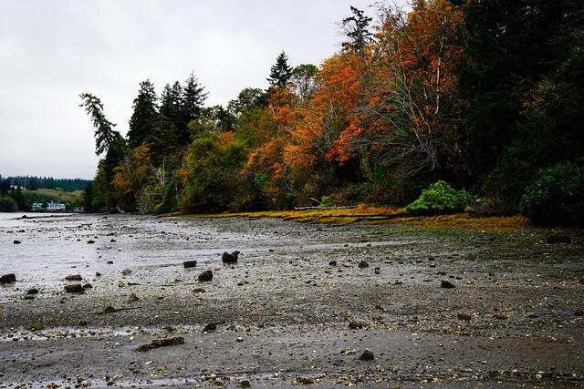 Poulsbo - Autumn - Low Tide