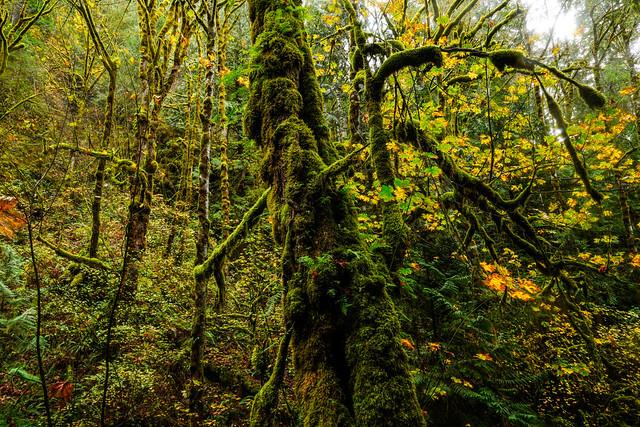 Rainforest - Olympic Peninsula - Washington