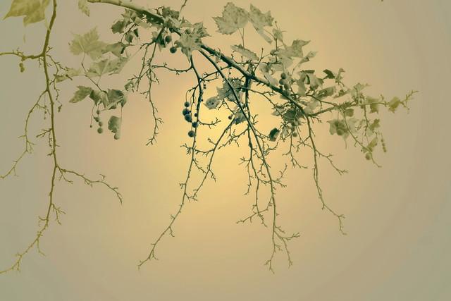 Light between the branches / Fény az ágak között