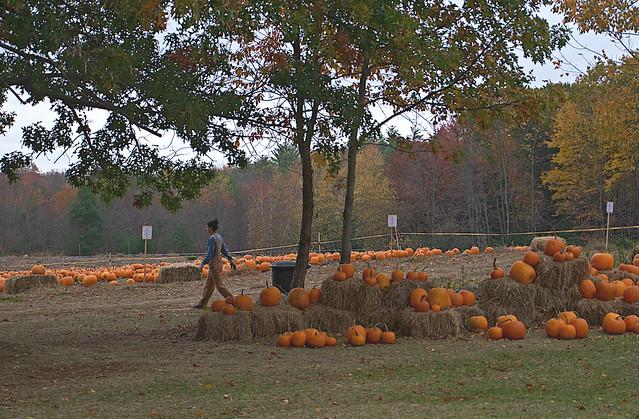 Pumpkin Patch_Bakie Farm