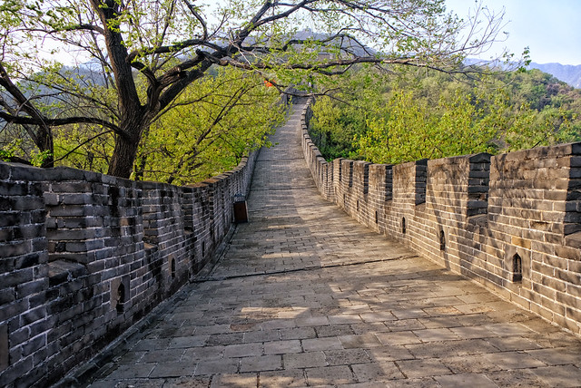 Trees over the Great Wall in Mutianyu, China