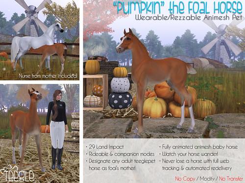 "Teeglepet ""Pumpkin"" the Foal!"