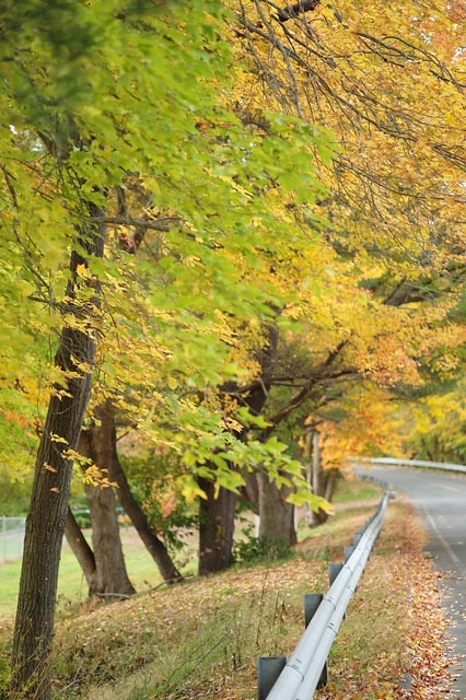 L1003308 Fall Colors