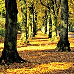 Autumn season at Haslam Park, Preston