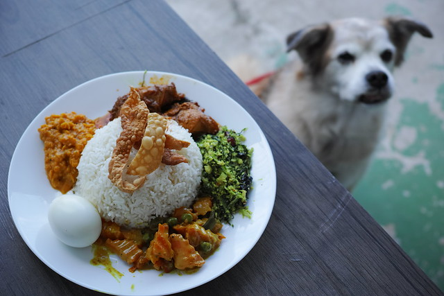 #SriLankanCuisine #Yachimata #CeylonSyokudo #Saru #Mutt #Dog #RescueDog #セイロン食堂