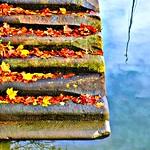Autumn steps at Preston Docks