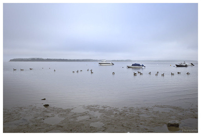 Gänse und Boote