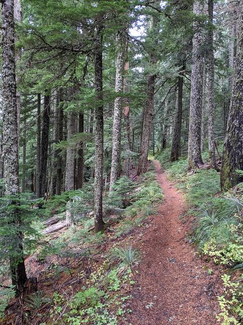 PCT, Mount Hood